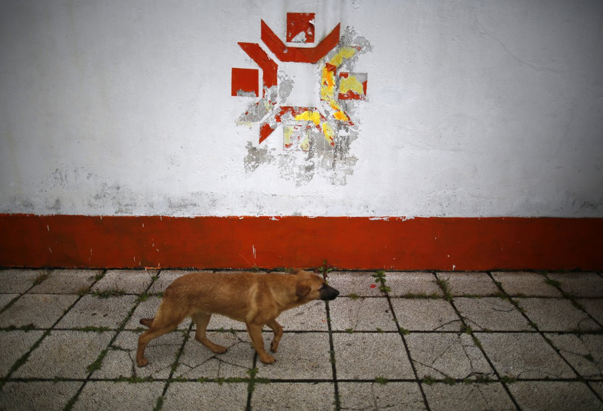 11 - A dog walks past the Kosovo Stadium where the opening ceremonies were held