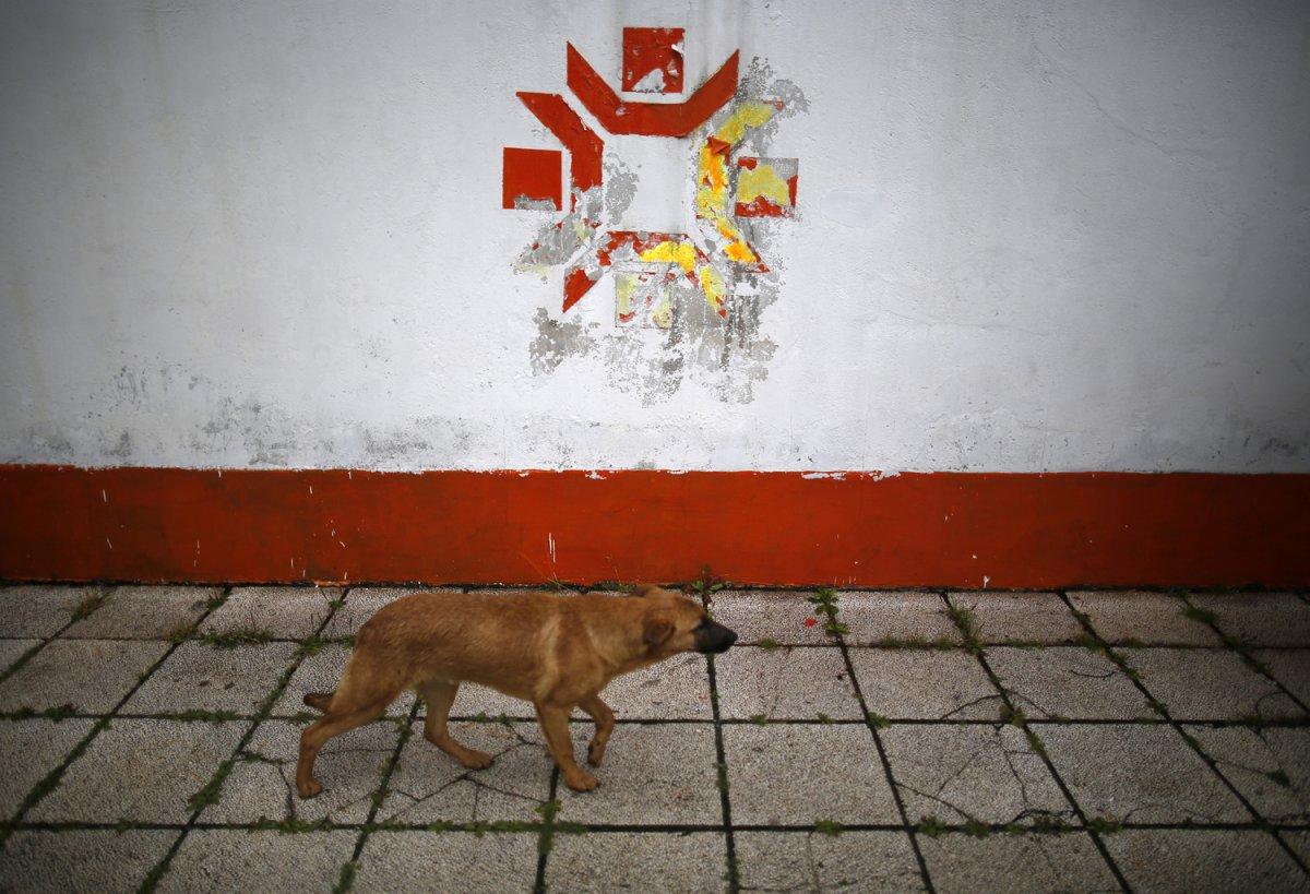 11 - A dog walks past the Kosovo Stadium where the opening ceremonies were held