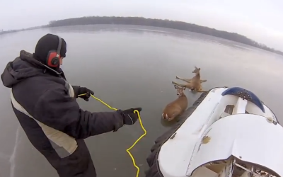 Incredible Video Shows How Two Stranded Deer Escaped an Iced Over Lake