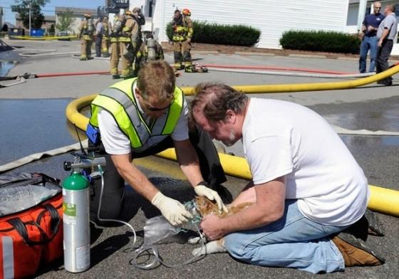 paramedics-cat-e1368654843494