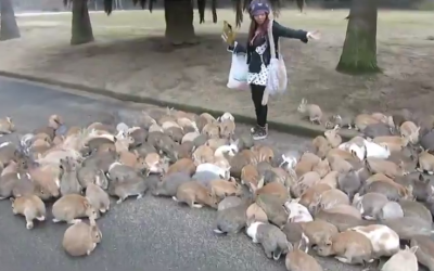 Thousands of Bunnies Surround a Girl in Japan – Think She Can Escape?