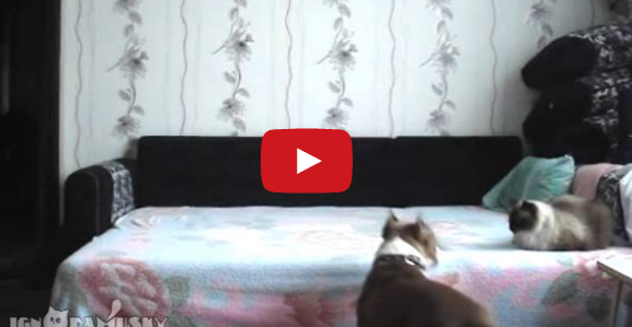 This Dog Waits For Everyone to Leave, and a Hidden Camera Captures What He Does Next