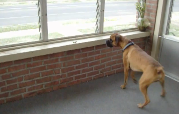 You Won't Believe What This Huge Dog Is So Afraid Of