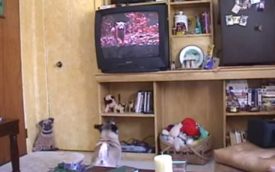 "This Pug's Emotional Reaction the End of ""Homeward Bound"" Is Why Dogs Rock"