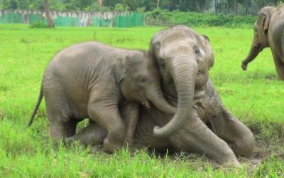 I've Never Seen Elephants This Happy!