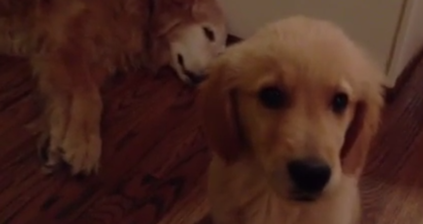 You're Gonna Die When You See How This Puppy Takes Care of His Mom's Nightmare