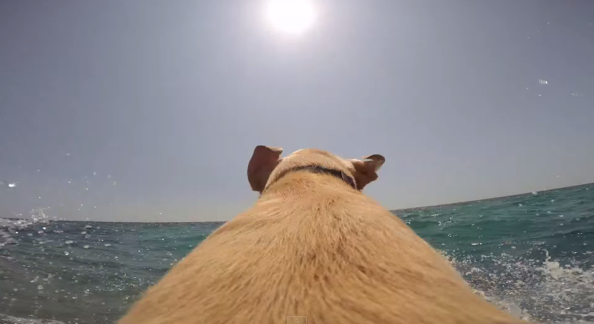 Awesome Video Lets You Feel The Unbridled Joy of Being a Dog