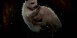 What 11 Animals Look Like in the Womb. So Cute – Especially the Penguin!