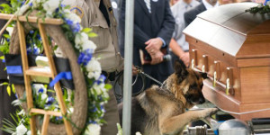 Incredible Photo: Figo the Dog Mourns His Lost Police Partner