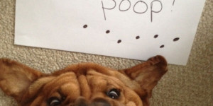 If What These 29 Dogs Did Doesn't Make You Laugh, Check Your Pulse (Don't Miss #19!)