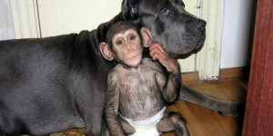 How One Awesome Dog Adopted an Orphaned Chimpanzee
